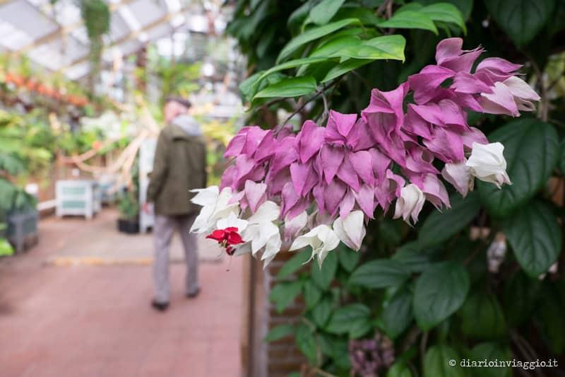 L'Hortus Botanicus di Leiden, un viaggio dall'Olanda al Giappone