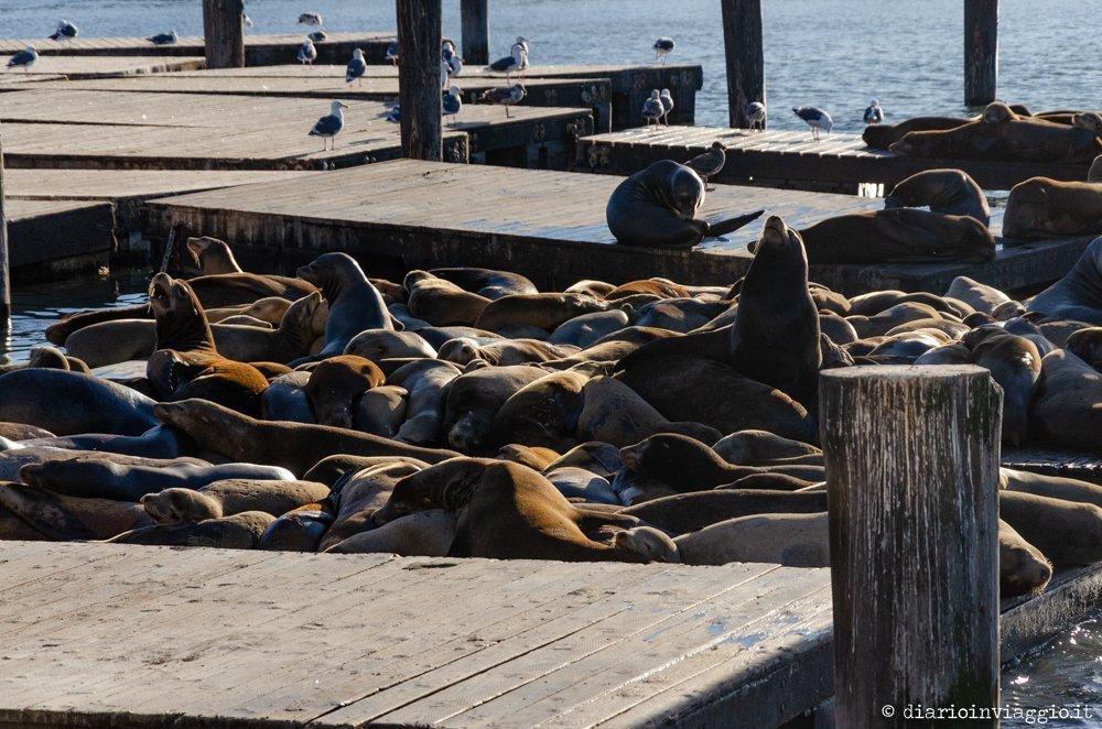 Fishermen's Wharf - San Francisco