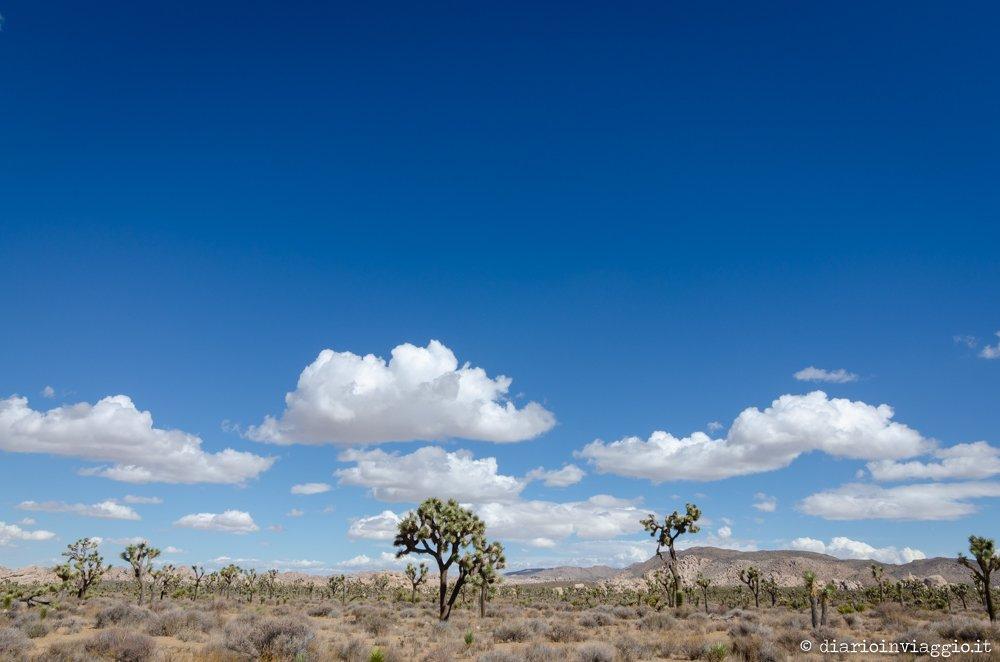 Joshua Tree National Park - USA