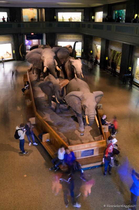 Museo di Storia Naturale - New York