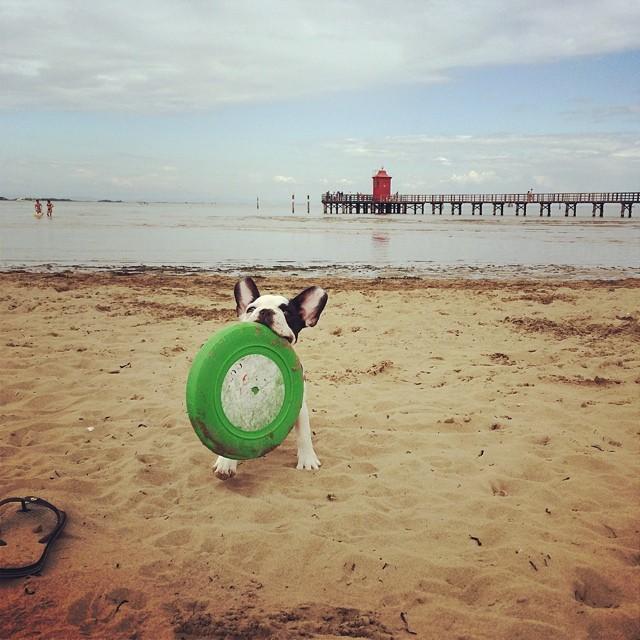 Al mare di Lignano con Lola nella spiaggia dei cani