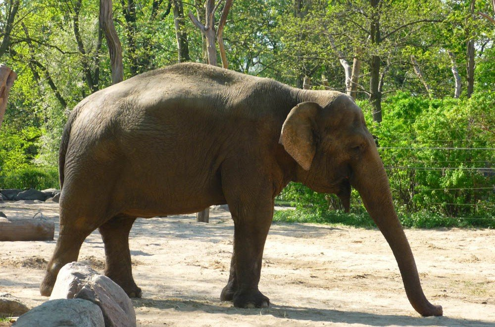 Visita allo zoo di Berlino