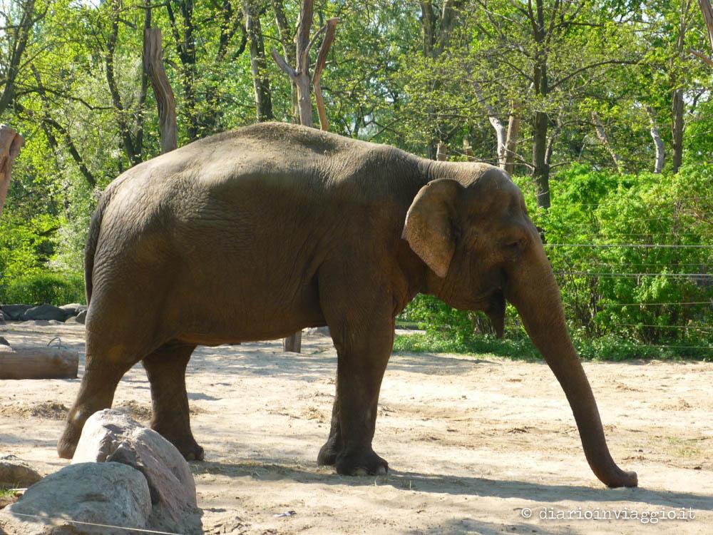zoo berlino-2