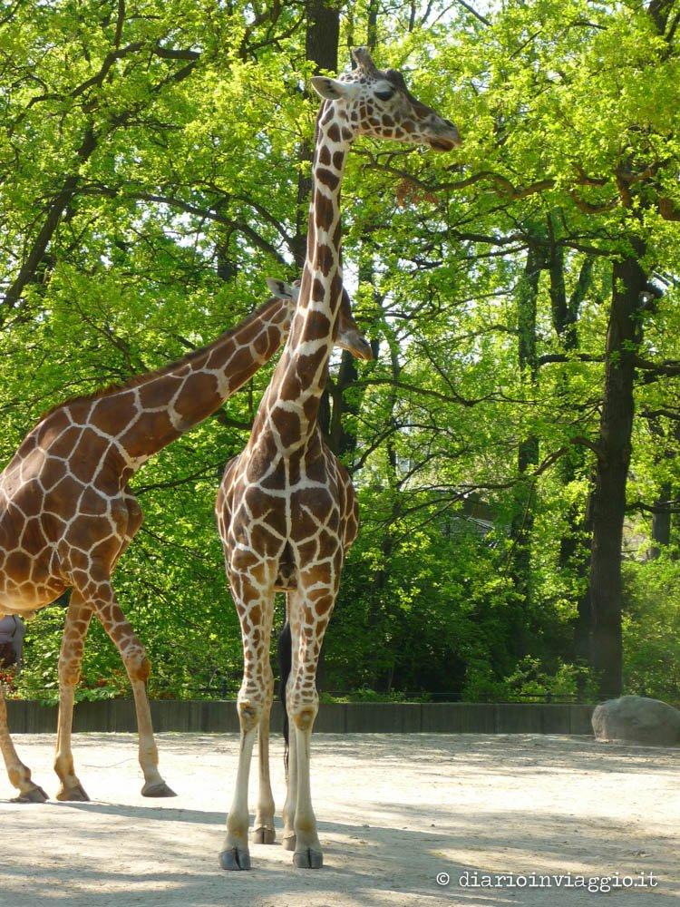 zoo berlino-3