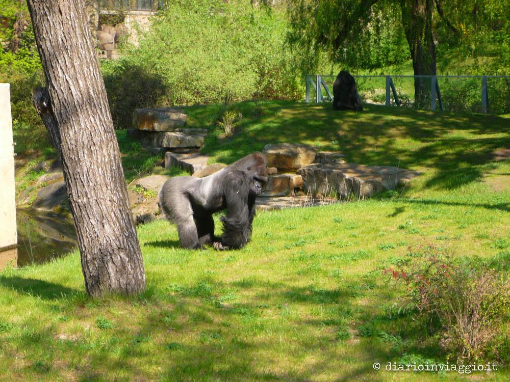 zoo berlino-4