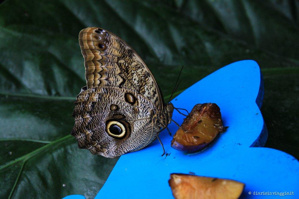 farfalle bordano