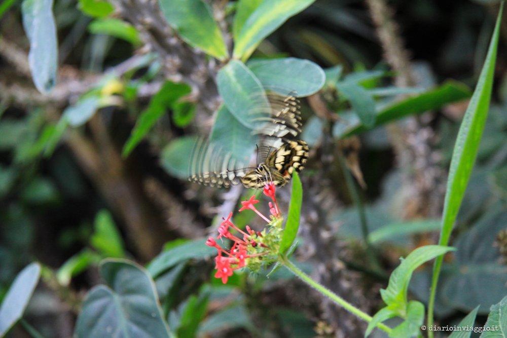 Poesia e colori alla Casa delle Farfalle di Bordano