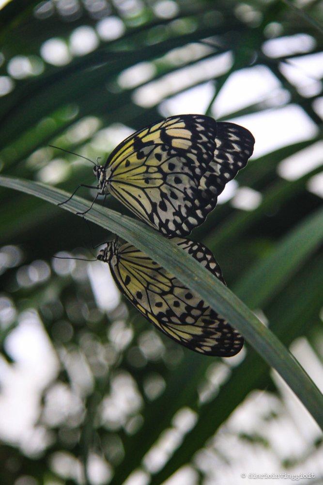 casa delle farfalle di Bordano