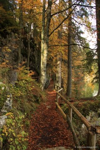 Fotografare fusine in autunno