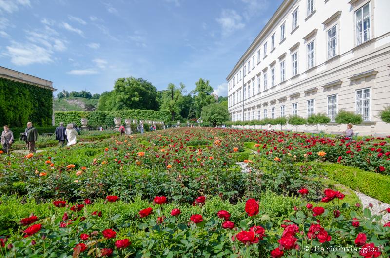 Mirabellgarten, il roseto