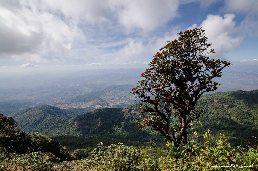 Kaew Mae Pan Nature Trail