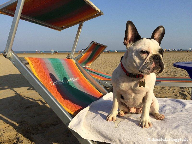 spiagge per cani in veneto