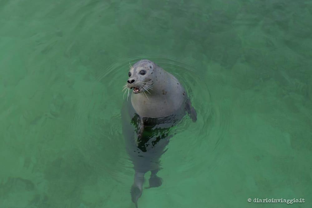 simpatica fochetta all'acquario