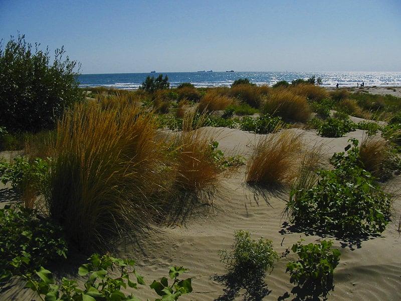 Dune alberoni Venezia