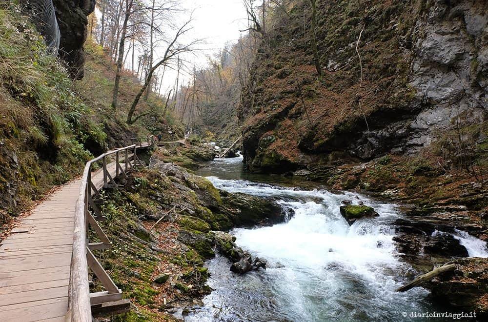 Viaggio magico nella gola del Vintgar in Slovenia