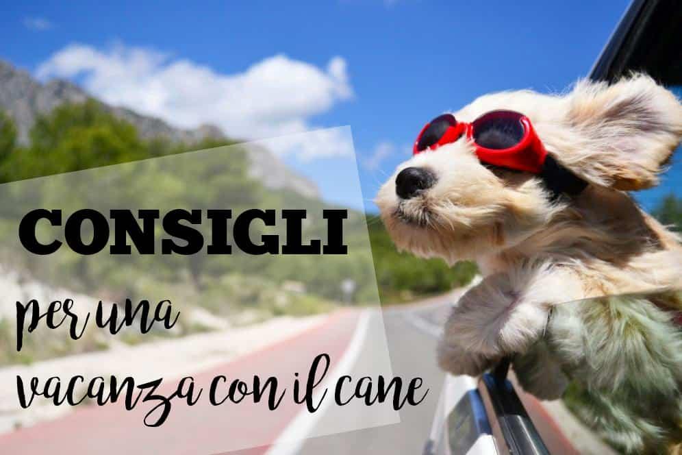 consigli vacanza con il cane