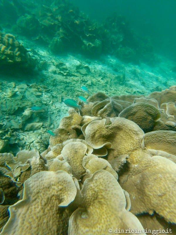 immersioni Koh Lipe cosa fare