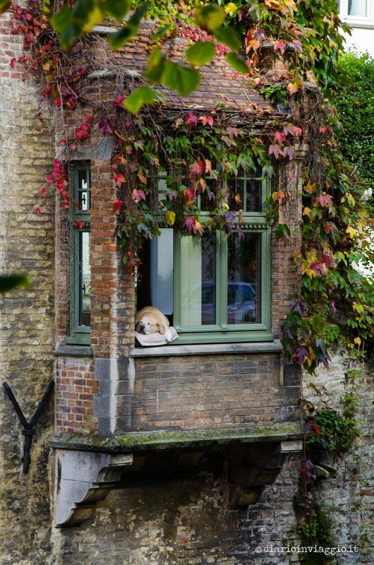 Il cane Fidel, la star di Bruges