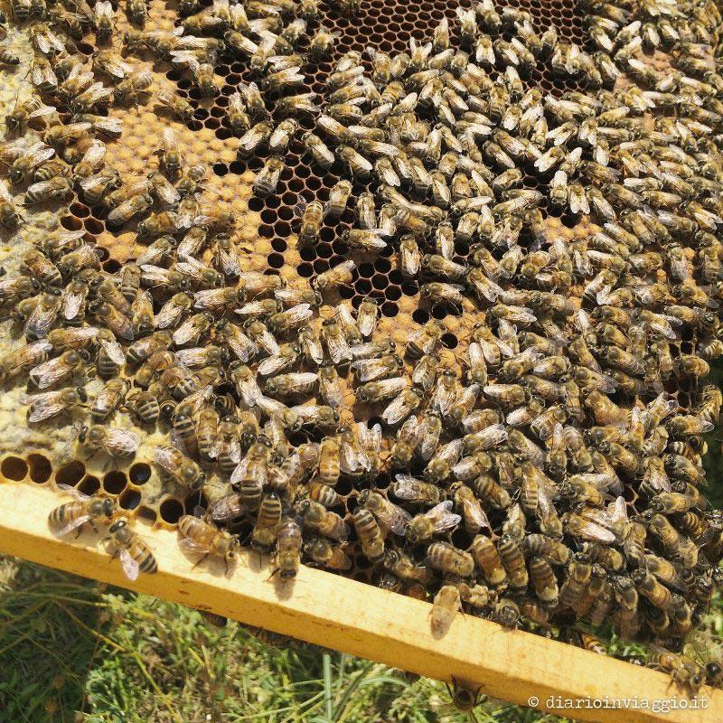 La danza delle api