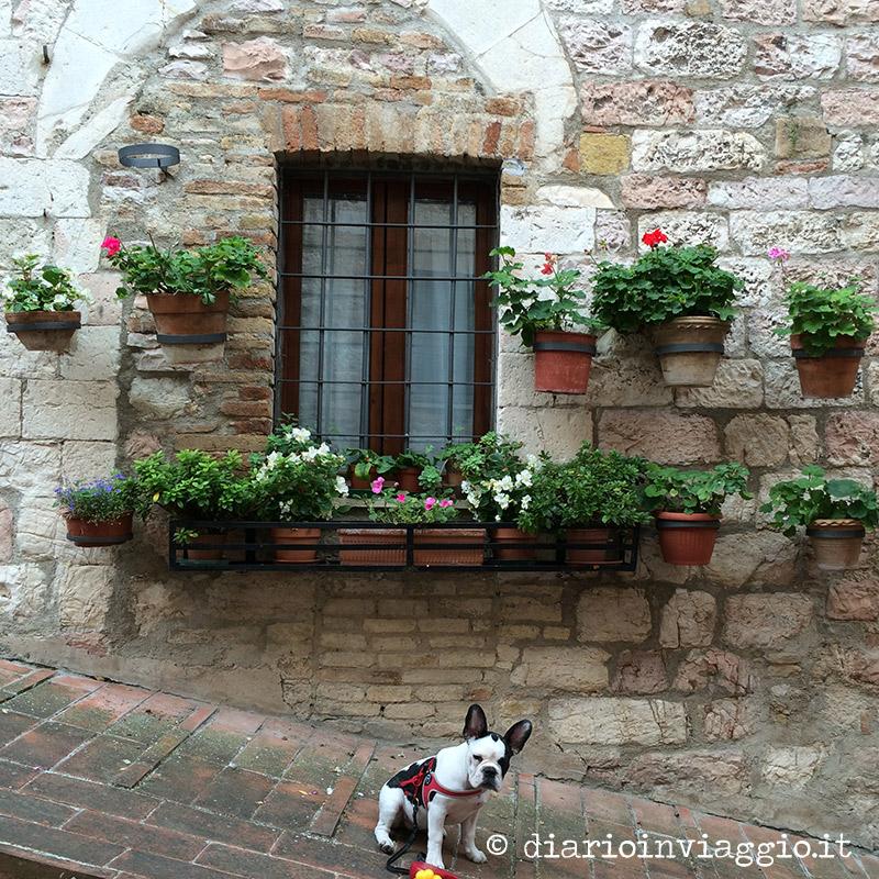 Vie carine di Assisi