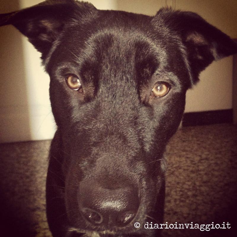 Il cagnolone nero del Piccolo Principe