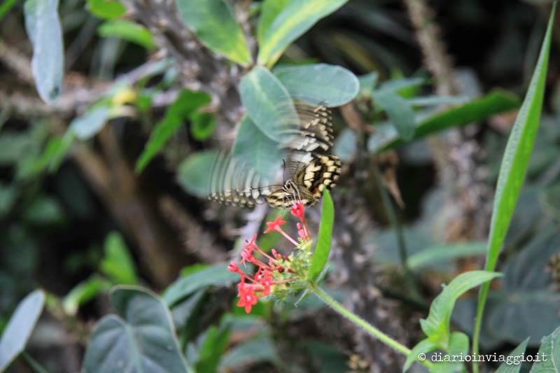 Farfalle alla casa delle farfalle di Bordano