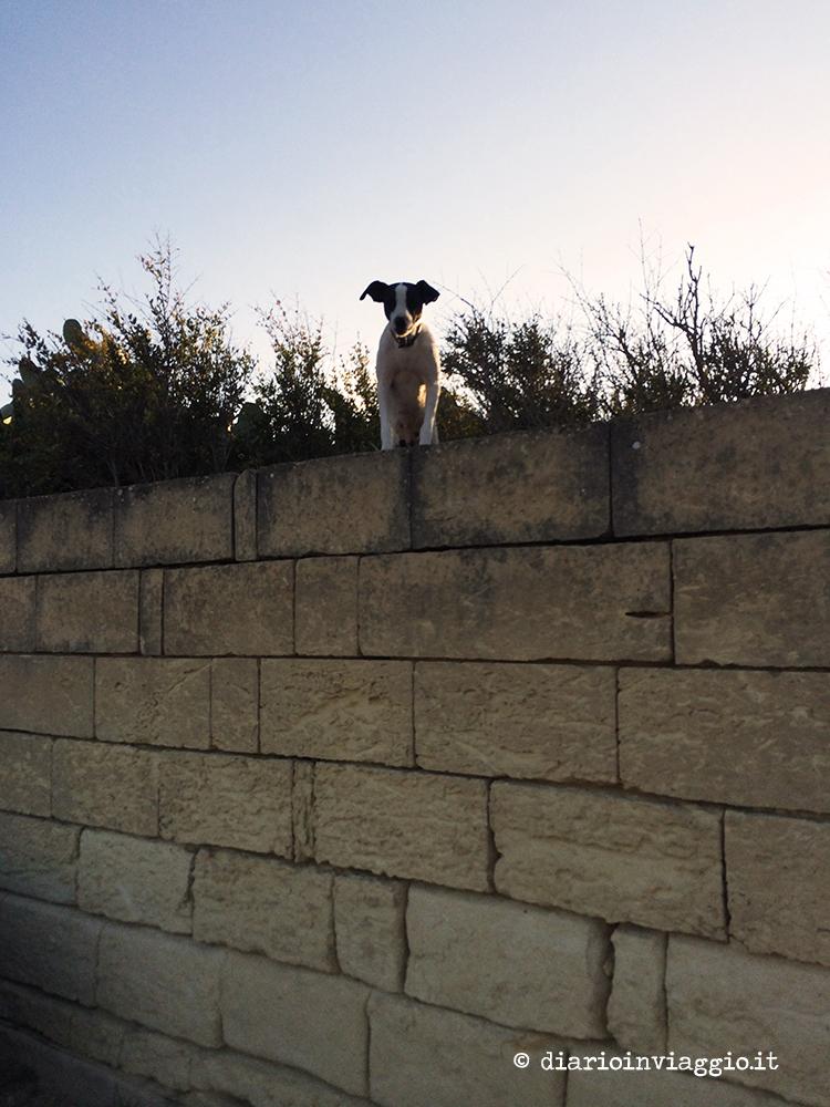 Un cane osserva dal muretto di una casa