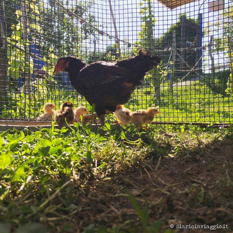 Animali da cortile al casone