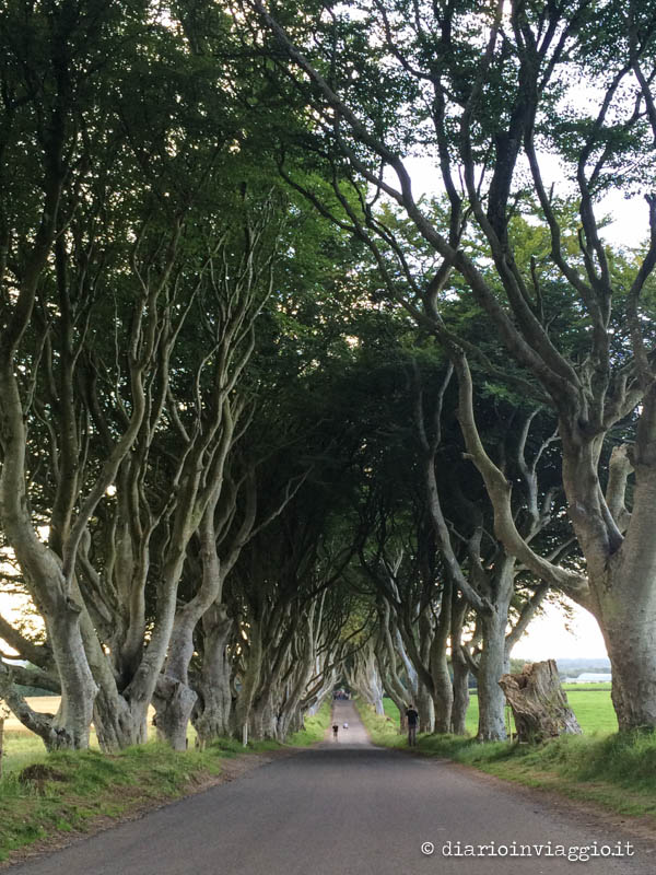 Dark Hedges, Irlanda del Nord