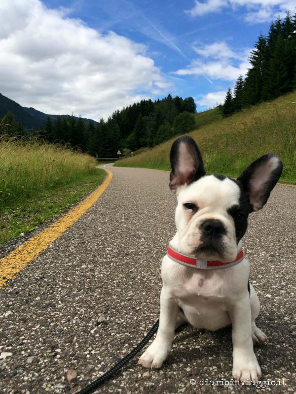 Lola in montagna