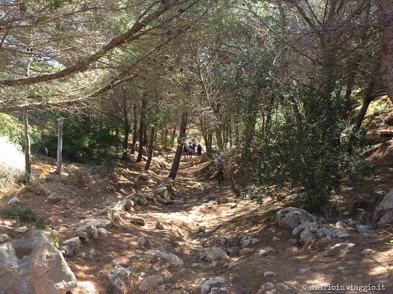 Sentiero per Cala Pulcino